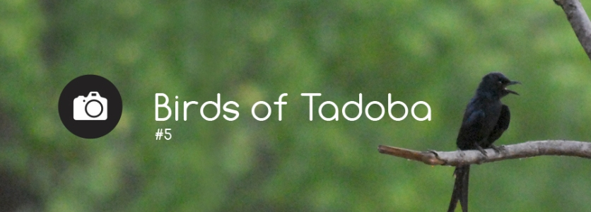 Birds_of_Tadoba_Profile