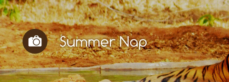 Summer_Nap_Profile