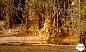 Tiger_day01_08