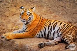 Tiger_day03_03