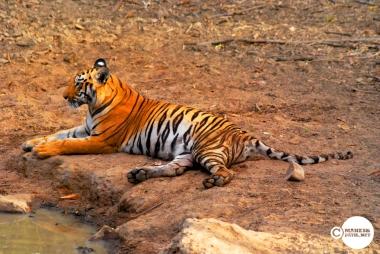 Tiger_day03_06